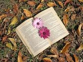 Book in nature — Stock Photo