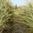 Coastal grass and lighthouse — Stock Photo #17860853