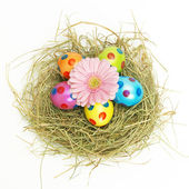 Easter nest with a pink flower — Stock Photo