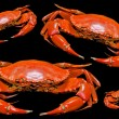 Steamed crab — Stock Photo