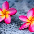 Plumeria — Stock Photo #36213781