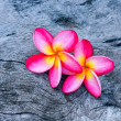 Plumeria — Stock Photo #36214031