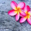 Plumeria — Stock Photo #36214117