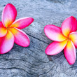 Plumeria — Stock Photo #36214191