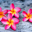Plumeria — Stock Photo #36214251