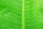 緑の葉 — ストック写真