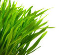 Close up of green grass isolated on white with copy space — Stock Photo