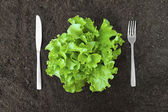 Butter lettuce salad in soil with fork and knife — Stock Photo