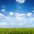 Field of green fresh grass under blue sky — Stock Photo #36653679