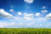 Bereich der grünen frisches gras unter blauem himmel — Stockfoto