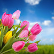 Bouquet of colorful tulips against blue sky — Stock Photo #42409105