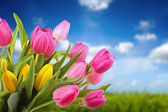 Bouquet of colorful tulips against blue sky — Stock Photo