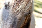 Horse eye closeup — Stock Photo