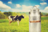 Old aluminum milk can against cow pasture meadow — Stock Photo