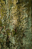 The rough surface of an old tree — Stock Photo