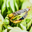 Beautiful background with wedding rings - Foto Stock