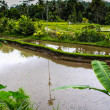 Rice field at mountain foot — Stock Photo