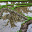 Rice field at mountain foot — Stock Photo #13264299