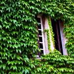 Beautifully framed ancient window — Stock Photo #13348001