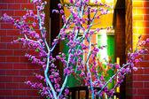 Cherry blossom tree near the building — Stock Photo