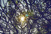 Sunlight between branches — Stock Photo