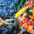 Stock Photo: Fishes under water