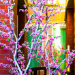 Cherry blossom tree near the building — Stock Photo