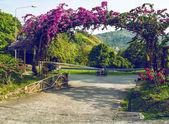 Mountain road — Stok fotoğraf
