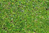 Horizons verts — Photo