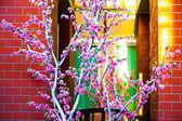 Třešňový květ strom poblíž budovy — Stock fotografie