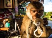 Yumuşak oyuncak ile maymun — Stok fotoğraf