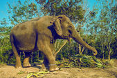 Elephant walking — Foto Stock