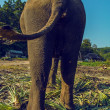 Image elephant — Stock Photo
