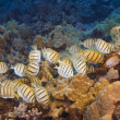 Stock Photo: School of Convict Tang