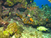 Cayman Island Reef Scene with Copy Space — Stock Photo