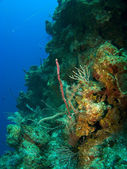Diving off the Wall in Cayman Brac — ストック写真