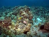 Kona Reef Scene in Hawaii — Stock Photo