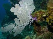 Moře fanoušků — Stock fotografie