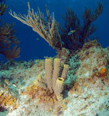 Tube Sponge and Soft Coral on a Caribbean Reef — Stock Photo