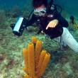 Stock Photo: Dive Master pointing at SeSponge