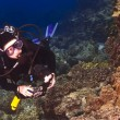 Diver checking out the Coral in Kona Hawaii — Stock Photo #14040292