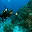 Stock Photo: Diver Exploring Reef with Flashlight