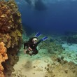 Stock Photo: Diver exploring reef in KonHawaii