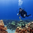 Scuba Diver with a Camera in Kona Hawaii — Stock Photo
