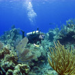 Stock Photo: ScubDiver swimming through CaymIsland reef