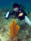 Dive Master pointing at a Sea Sponge — Stockfoto
