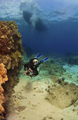 Diver exploring a reef in Kona Hawaii — Stock Photo