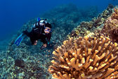 Diver looking at the Coral in Kona Hawaii — Stockfoto