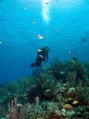 Scuba Diver looking upward in Cayman Brac — Stock Photo