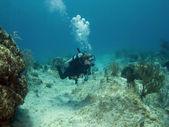 ныряльщик плавание через каймановы острова риф — Стоковое фото